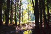 лесовозная дорога вдоль Большой Лабы